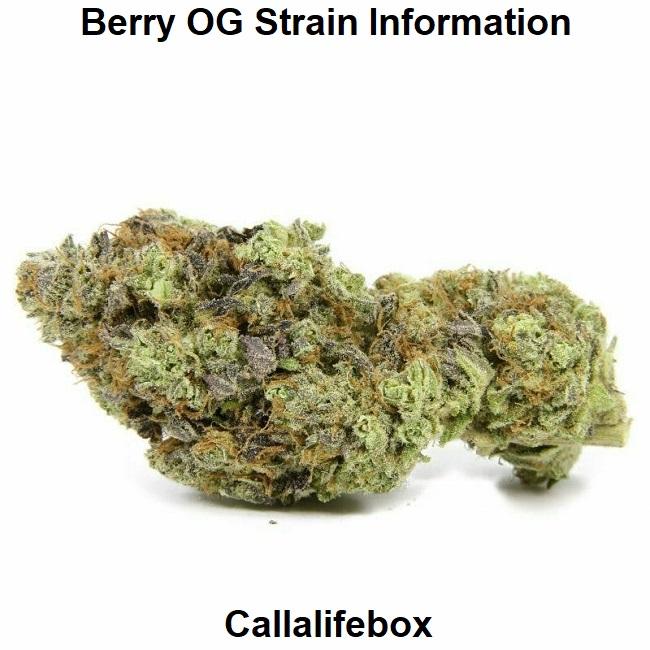 Berry OG Strain Information