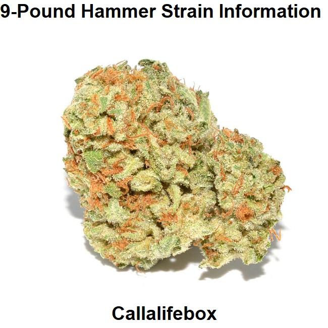9-Pound Hammer Strain Information