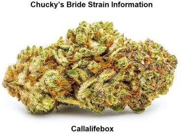 Chucky's Bride Strain Information