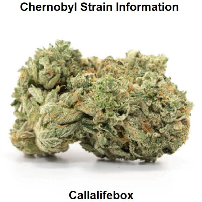 Chernobyl Strain Information