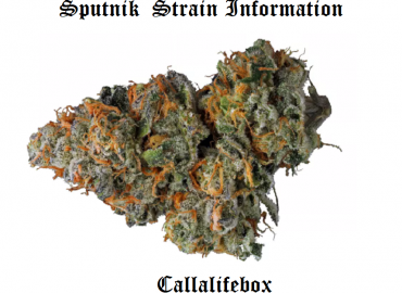 sputnik inter