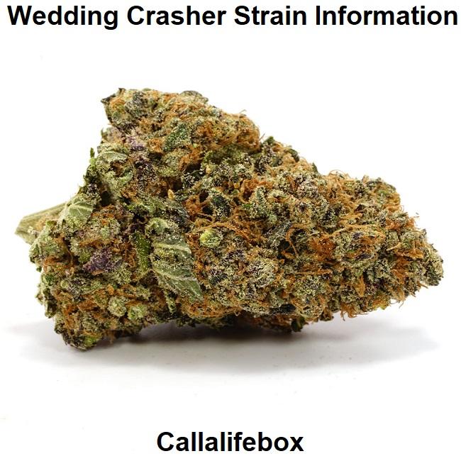 Wedding Crasher Strain Information