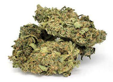 blue weed strain