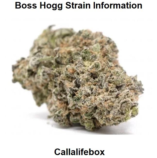 Boss Hogg Strain Information