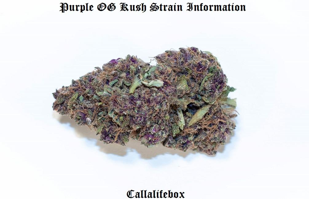 purple og strain