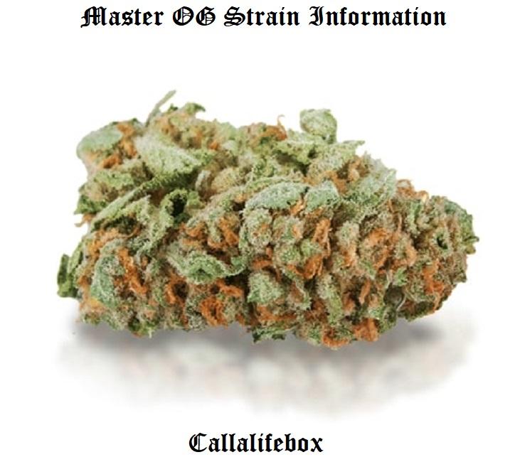 master og strain