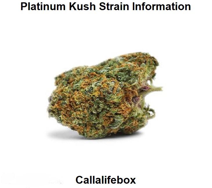 Platinum Kush Strain Information