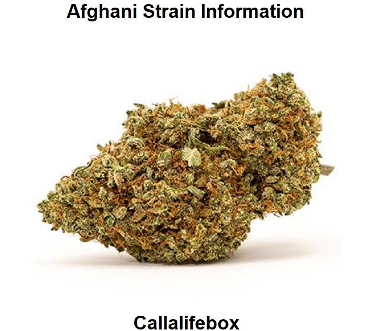 Afghani Strain Information