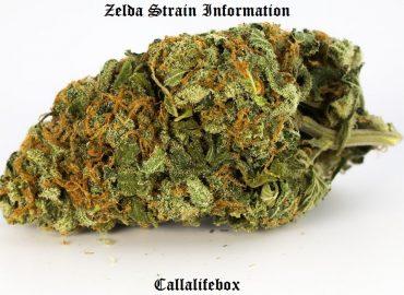 zelda leafly