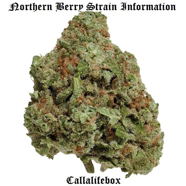 northern berry strain
