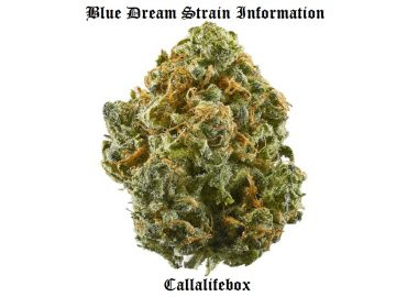 what is blue dream