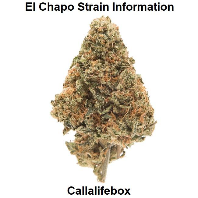 El Chapo Strain Information