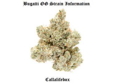 bugatti info