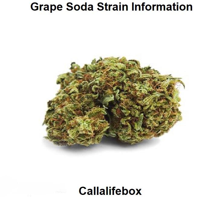 Grape Soda Strain Information